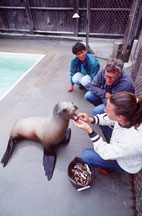 researchers with seal